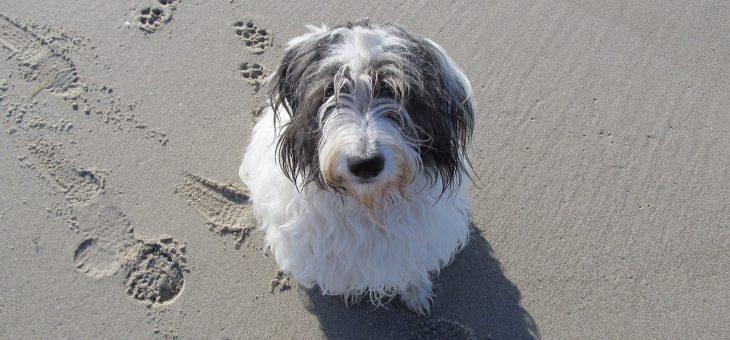 Nuove spiagge per cani: l'elenco degli stabilimenti aperti ai 4 zampe